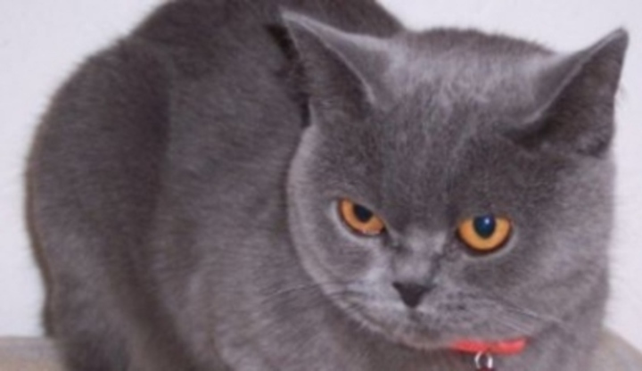 Těsná italská kočička