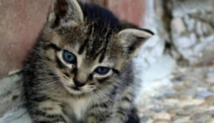 Šťavnaté kočička pic