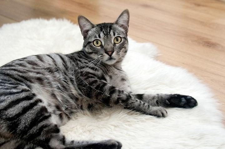 velké kořist kočička rty velká stříkací vodní hračka